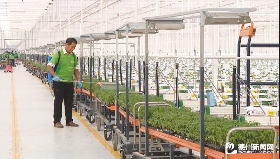 陵城区千亩级智慧农业大棚开启农