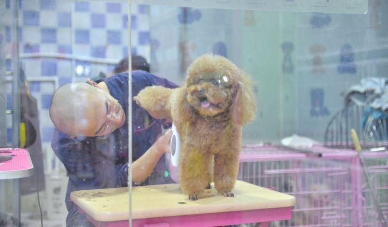 春节临近,宠物市场生意旺